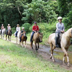 Horse Riding and Green Island