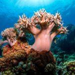 Spaghetti Coral