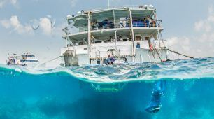 Great Barrier Reef Liveaboard and Rainforest