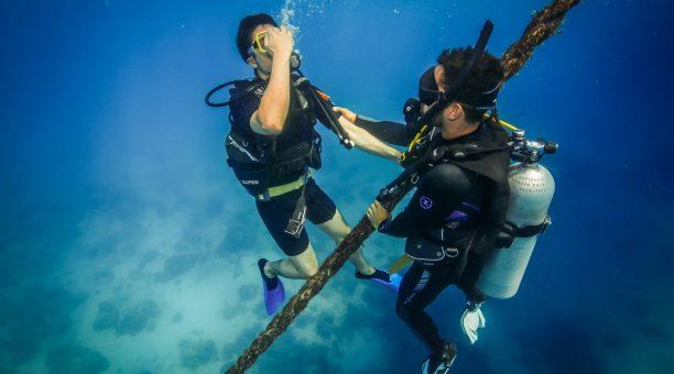 Try Introductory scuba diving!